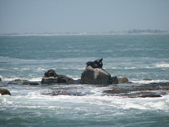 Ilha dos Lobos: Ilha