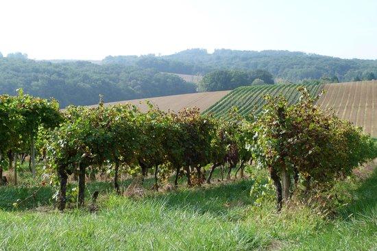 Bassoues, ฝรั่งเศส: Les vignes