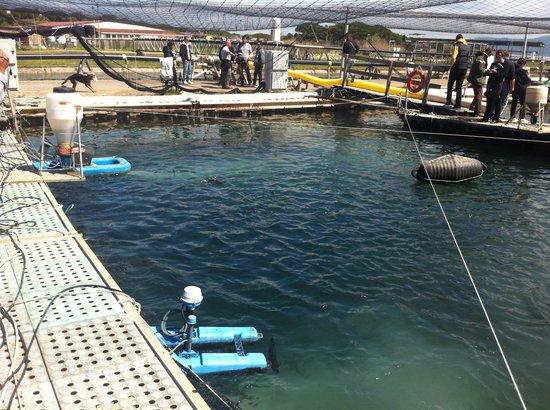 Vasche di allevamento foto di laguna di orbetello for Vasche per allevamento ittico
