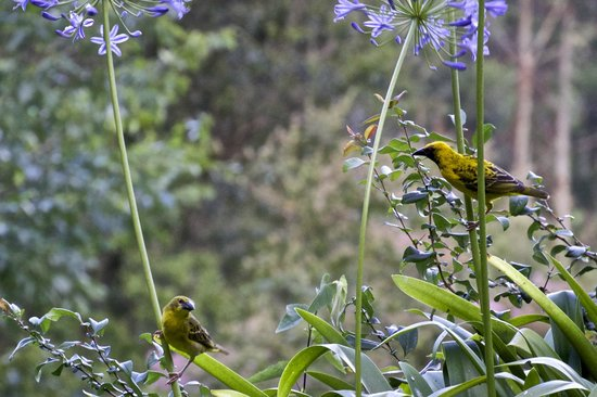 Pleasant Places Guesthouse: B&B Musicians, A couple of the many beautiful birds