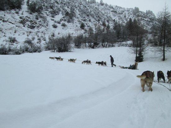 La Lauzetane : Ballade en chiens de traineaux