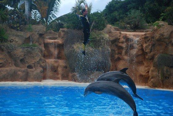 Loro Parque : Dolphin show