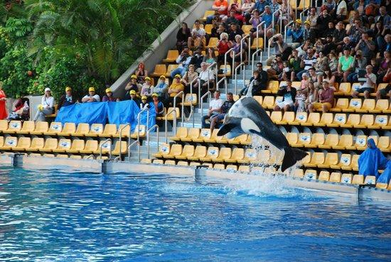 Loro Parque : Killer whale show