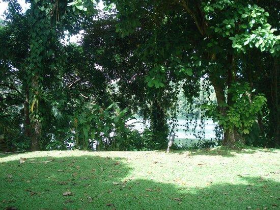 Melia Panama Canal: Área verde