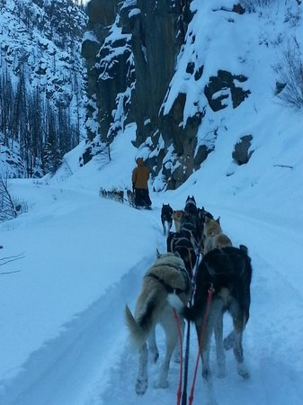 Absaroka Dogsled Treks: Just Another Day at the Office...