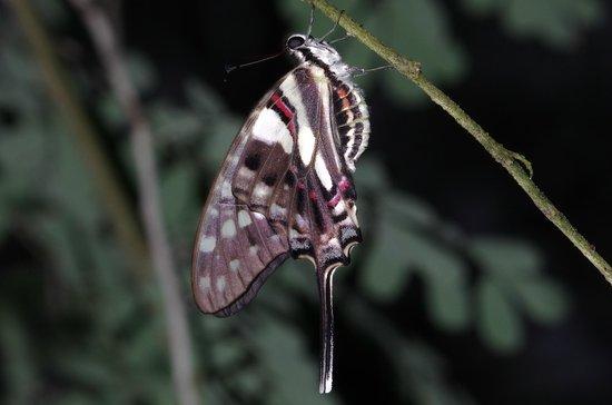 Papiliorama: Papillon 2
