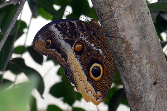 Papiliorama: Papillon 1
