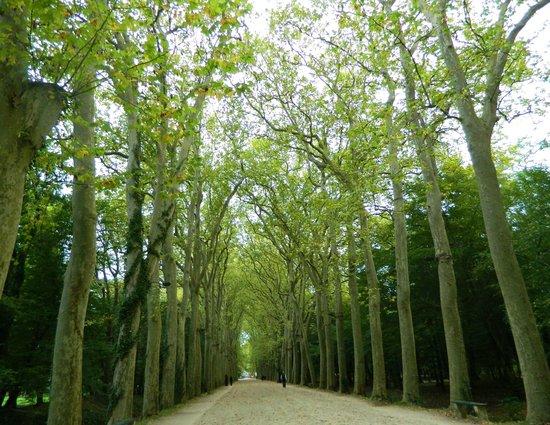 Château de Chenonceau : The Tree Alley