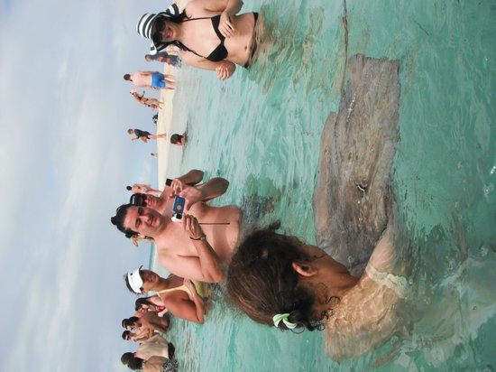Oasis Divers : Sting Ray at Gibbs Cay