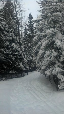 Minocqua Winter Park & Nordic Center: groomed trails