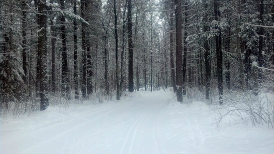 Minocqua Winter Park & Nordic Center: beautiful view