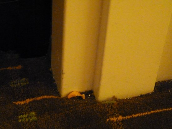 Embassy Suites by Hilton Orlando Lake Buena Vista South: chip en el piso por 10 días