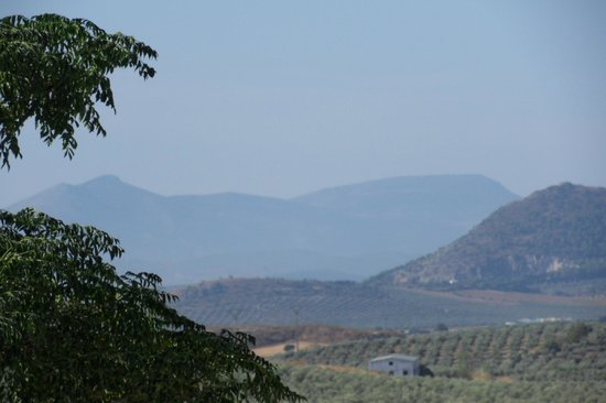 Hacienda Horses: Sierra Nevada Mountains