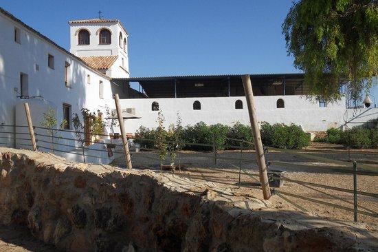 Hacienda Horses: Rear View