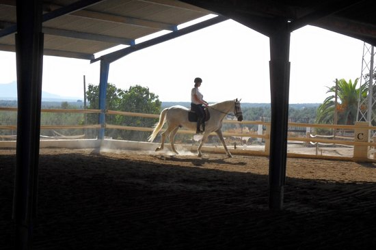 Hacienda Horses : Riding Arena