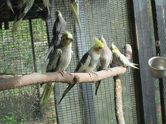 Bird Gardens of Naples: pretty birds