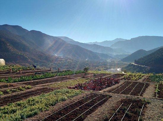 Kasbah Bab Ourika : the herb gardens