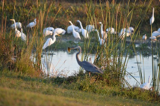 Kissimmee Prairie Preserve State Park: The slough is a great place for a natural adventure.