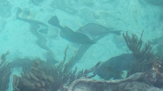 Dry Tortugas National Park: Clear Water -  a shot from the Moat