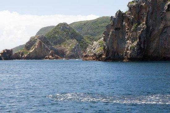Dive Tutukaka: fish school, Poor Knights Islands