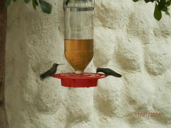 Rosa Morada Tlaquepaque: Hummingbirds at the feeder just outside our door.
