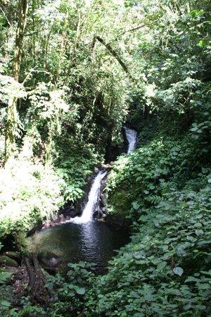 Monteverde Cloud Forest Biological Reserve: waterfall