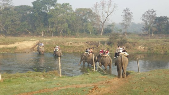 River Bank Inn: elephant safari set up by the hotel