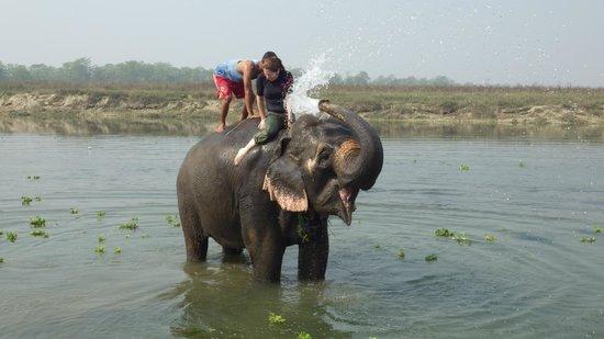 River Bank Inn: Elephant bathing right outside the hotel