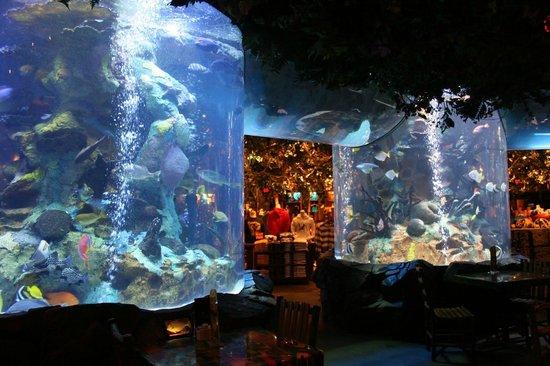 rainforest cafe peceras increibles