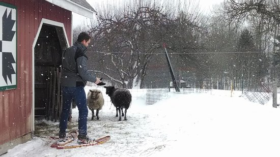 Sandtown Farmhouse Bed and Breakfast: Visiting with the sheep