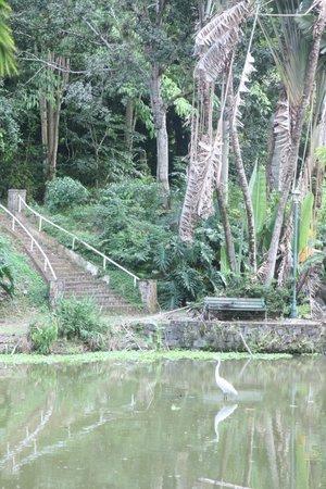 Jardin Botanico: сад Моне