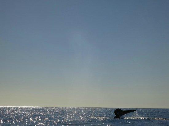 Barcelo Gran Faro Los Cabos : Baleine