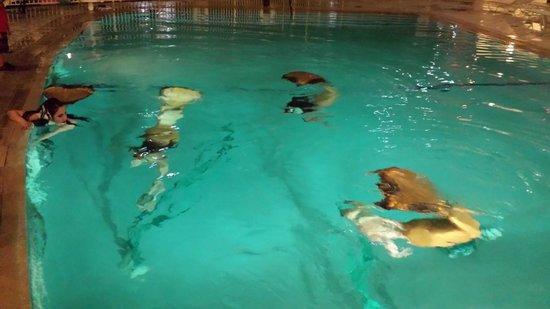 B Ocean Resort Fort Lauderdale: mermaid show