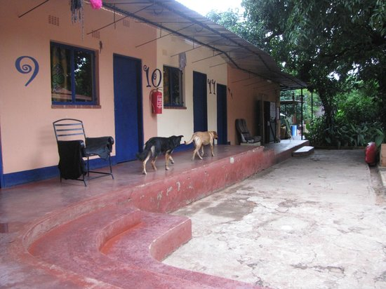 Livingstone Backpackers : The hostel's dogs in one of their routine patrols