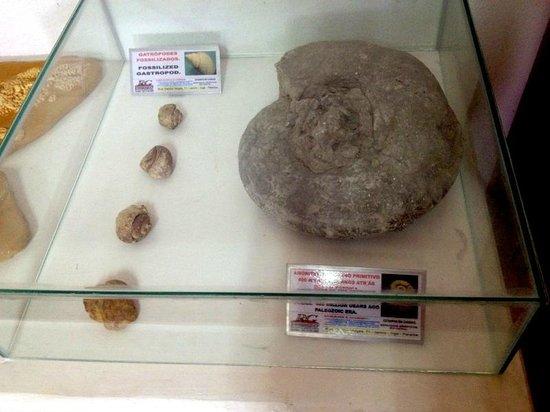 Pedra de Inga: Fossel de um caramujo