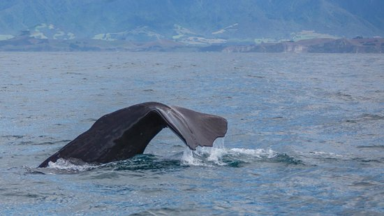 Whale Watch: The tail