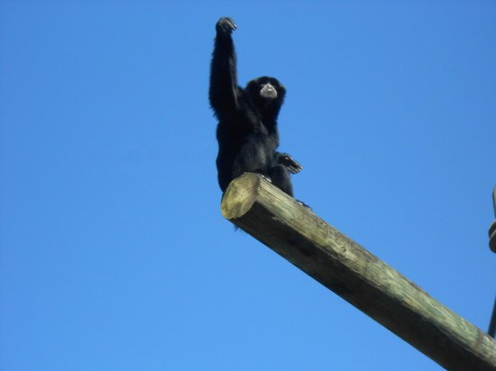 Tampa's Lowry Park Zoo: In primate world