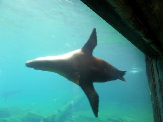 Auckland Zoo : A Flying Seal at the Zoo