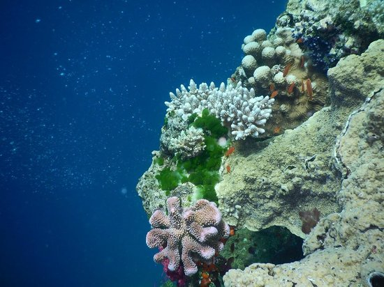 Jean-Michel Cousteau Diving: One can appreciate the clarity of the water....