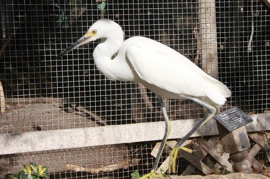 Seaside Seabird Sanctuary: Sign