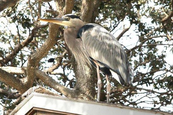 Seaside Seabird Sanctuary: Birds