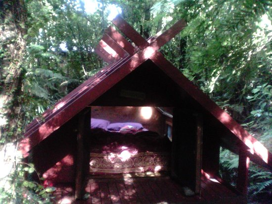 Te Nikau Retreat: The Stargazer