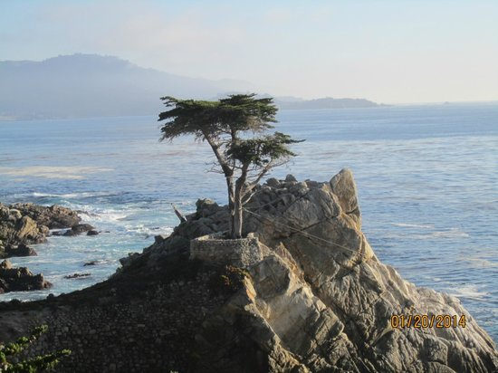 17-Mile Drive: lone cypress tree