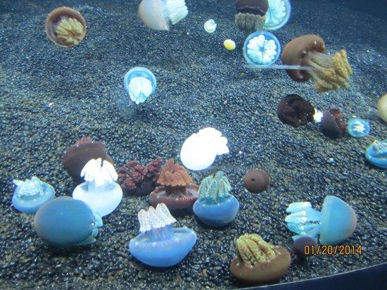 Monterey Bay Aquarium: jellies