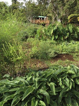 Keolamauloa : garden