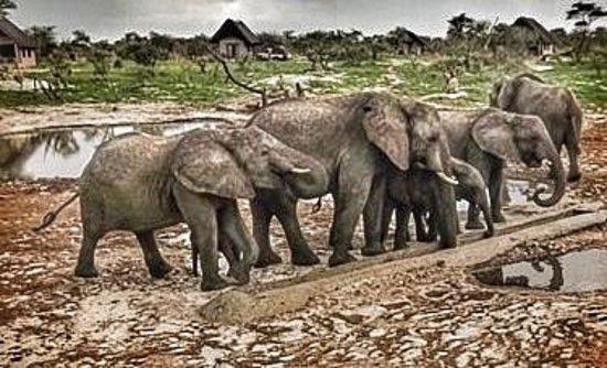 Elephant Sands Botswana: At Water Hole