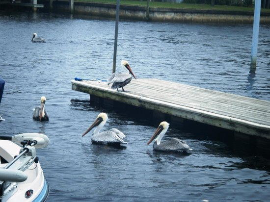 Suwannee, FL: The gulls.