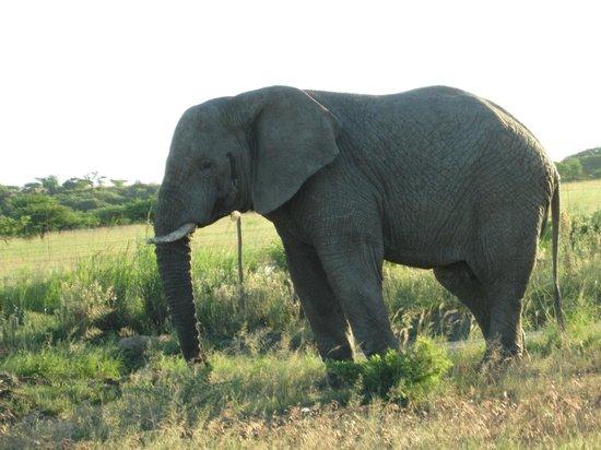 Ndaka Safari Lodge : Elephant