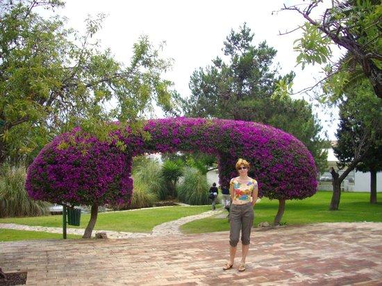 Algarve Gardens: Цветник в Албуфейре