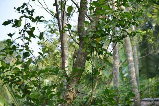 Bloom Garden Guesthouse Villa: Squirrel